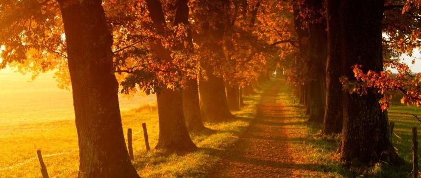 Chemin & feuilles d'automne